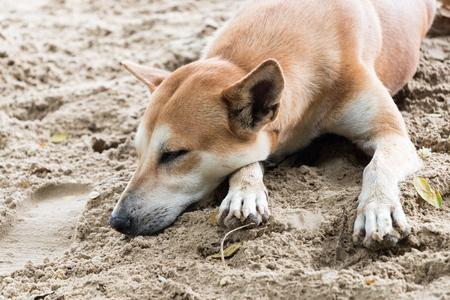 The dog sleep or relax on the sand beach