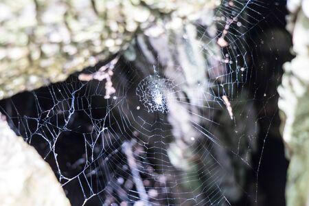 old cobweb No spider living
