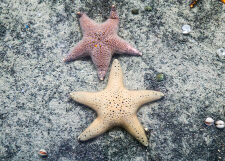 Starfish on sand in fish tank