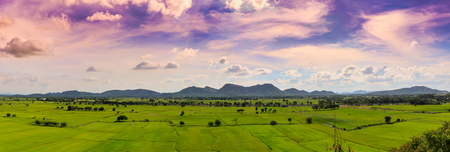 Rice field, skies and mountain panorama view for background