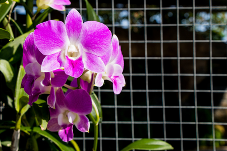 Orchid flower with grill background