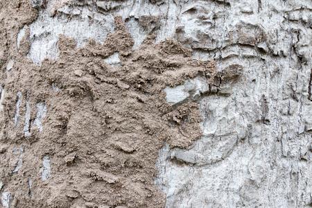 termite on tree bark eating wood Stock Photo
