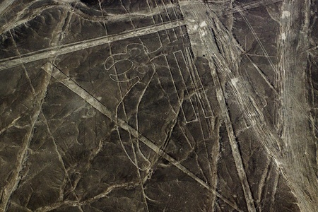 Parrot  Nazca Lines are a series of geoglyphs located in the Nazca Desert photo