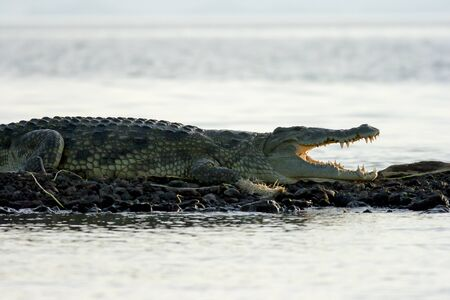 Nile crocodile, Lake Chiamo, Arba Minch, Ethiopia  Stock Photo