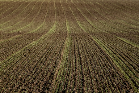 Field sown crops Stock Photo