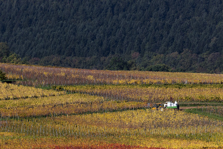 Vineyards in Alsace, France Stock Photo
