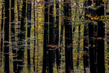 Forest in autumn  Germany
