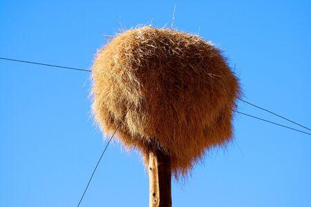 weaver bird nest: Sociable Weaver Bird nest, Scenery on route Sossusvlei-Lüderitz