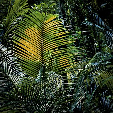 back lit: Back Lit Palm
