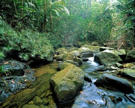 Rainforest, Endau Rompin National Park, Malaysia