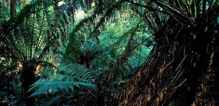 np: Dandenong NP, Victoria, Australia
