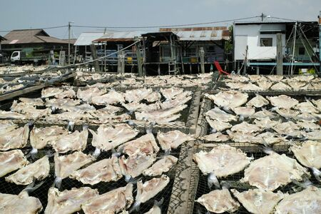fishing village: Fish products. Sekinchan fishing village, peninsular Malaysia.