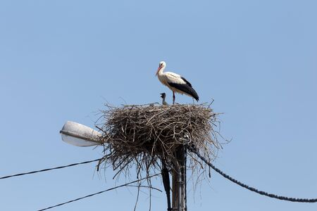 Storks in the nest. Stock Photo