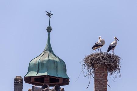 nestling: White storks nestling Stock Photo