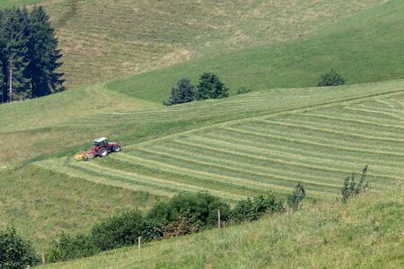 Farmer turning rowed hay for drying. Black Forest, Germany Stock Photo