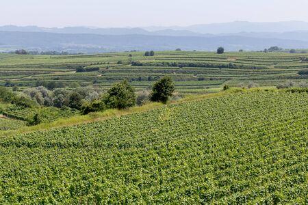 loess: Terraced vineyards in Endingen am Kaiserstuhl, Germany.
