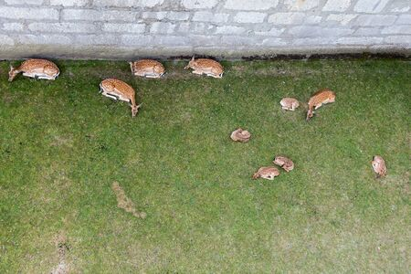 no body: Deers at Munot fortress
