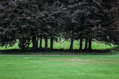 meadowland: Trees in the Park
