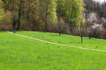 Landscape in Switzerland, spring time.