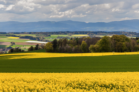 Dramatic clouds above field of Rapeseed and Alps. Switzerland