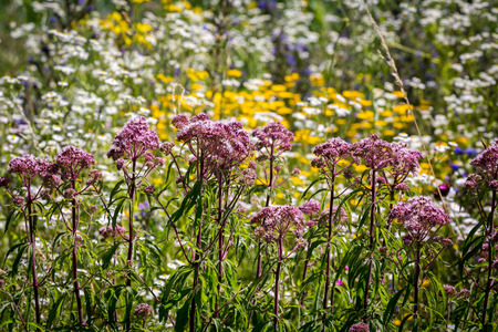 Spring flowers in Switzerland. Stock Photo
