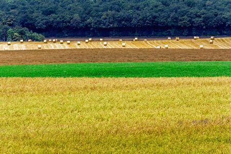Landscape around Chablis village. Burgundy, France