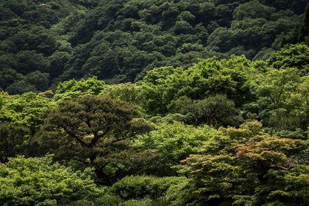 Forest around Kyoto, Japan.