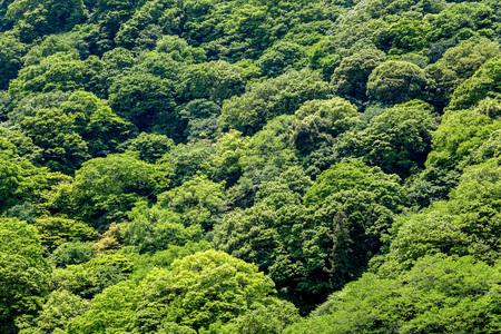 Forest around  Arashiyama, Kyoto, Japan.
