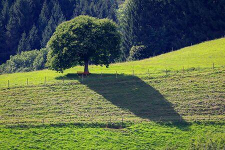 Landscape Black Forest, Baden-Württemberg, Germany.