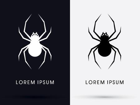 spider cartoon: Spider shadow  symbol icon graphic vector.