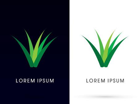 aloe vera plant: Herb, grass, aloe vera , plant ,logo, symbol, icon, graphic, vector.