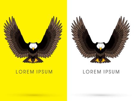 cartoon eagle: Eagle or Hawk flying, spread the wings , vector.
