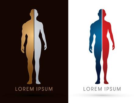 silueta masculina: Silueta, la mitad del cuerpo, anatomía masculina y femenina, gráfico de vector.