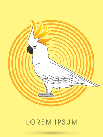 cockatoo: Cockatoo, on circle line background, graphic vector.