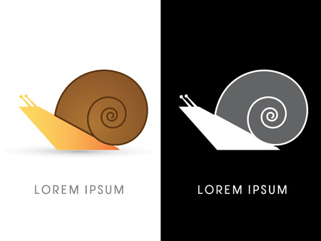 molluscs: Snail isolated, graphic vector. Illustration