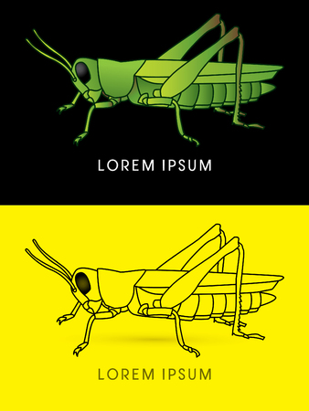 hopper: Grasshopper, colorful and outline graphic vector.