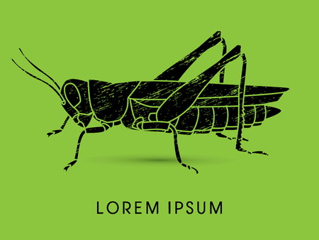hopper: Grasshopper, designed using grunge brush graphic vector.