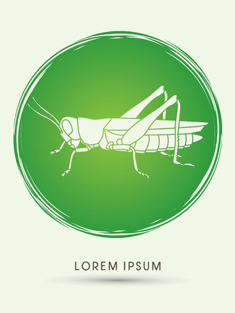 locust: Grasshopper, designed on grunge cycle graphic vector.
