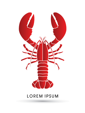 crawfish: Lobster graphic vector.