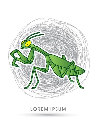 mantis: Mantis, Mantodea grasshopper on confuse line graphic vector