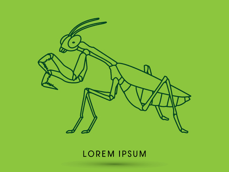 Mantis, Mantodea grasshopper outline graphic vector Illustration