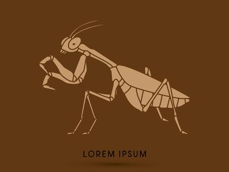 mantis: Mantis, Mantodea grasshopper graphic vector