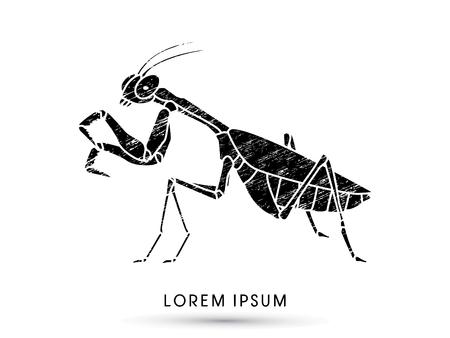 Mantis, Mantodea grasshopper designed using grunge brush graphic vector