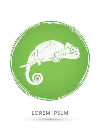 veiled: Chameleon designed using grunge brush on circle line background graphic vector.