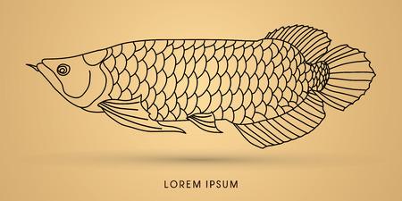 Arowana Fish, Outline graphic vector.