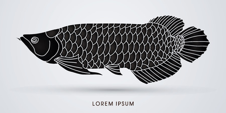 Black Arowana Fish, graphic vector.