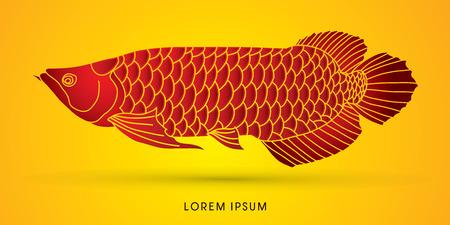 arowana: Red Arowana Fish, graphic vector.