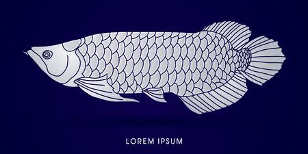 arowana: Silver Arowana Fish, graphic vector.