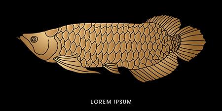 Gold Arowana Fish, graphic vector.