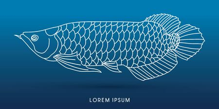 stroke of luck: Arowana Fish, outline graphic vector.